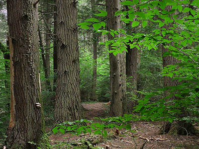 Lost Forests of New England with a Q & A with Old Growth expert David Govatski in partnership with Ammonoosuc Conservation Trust, The Colonial Theatre, Bethlehem, NH